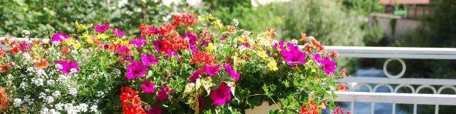 fleurissement-2018-7-mairie-dallevard-les-bains.jpg