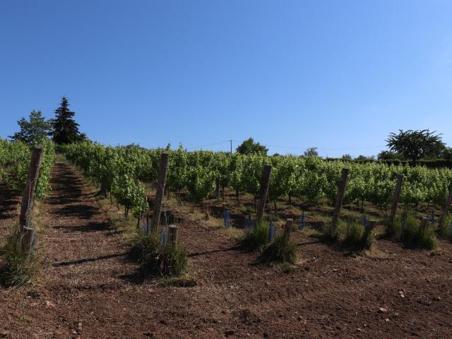 Les vignes du Coteau de Vignes