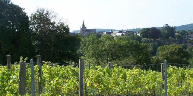 Les vignes du Coteau des Vignes