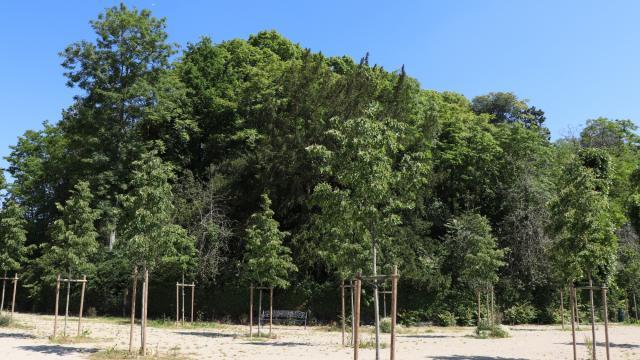 La Motte de Beaumont-sur-Sarthe