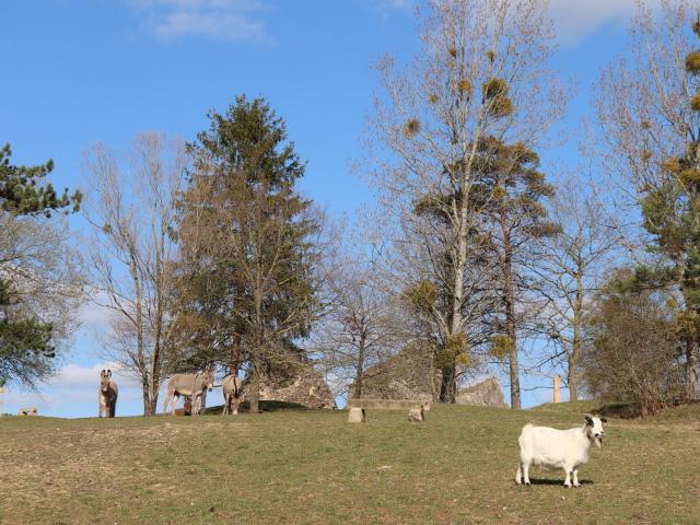 Le parc animalier de Bourg-le-Roi