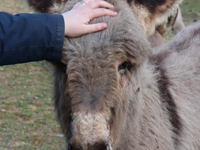 Jeune âne au Parc animalier de Bourg-le-Roi