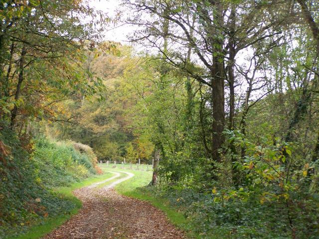 La Forêt de Pail