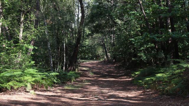 Chemin de randonnée à Saint-Léonard-des-Bois