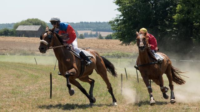 chevaux-pauline-6.jpg
