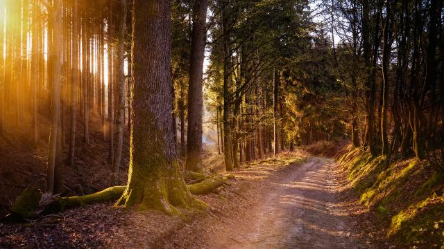 forest-5038025-1920.jpg