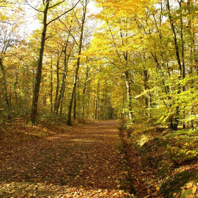 Forêt De Combrée 2012©mairie (4)
