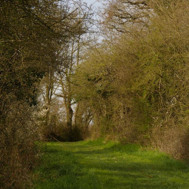 sentier-de-randonnee-anjou-bleu-5.jpg
