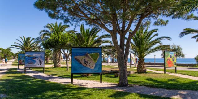 Argeles Photo Nature L.lacombe
