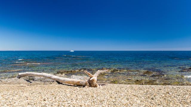 Plage Mas Larrieu Argeles Sur Mer©laurent Lacombe