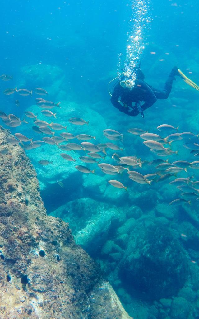 Plongee Argeles Sur Mergarnements (3)