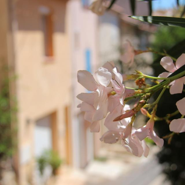 Fleurs Auriol Oti Aubagne