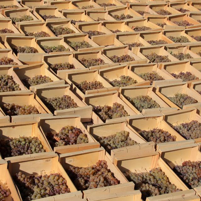 Raisins Cagettes Domaine La Michelle Auriol Oti Aubagne