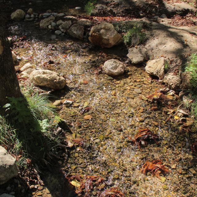 Automne Nature Ruisseau Feuilles Sainte Baume Oti Aubagne