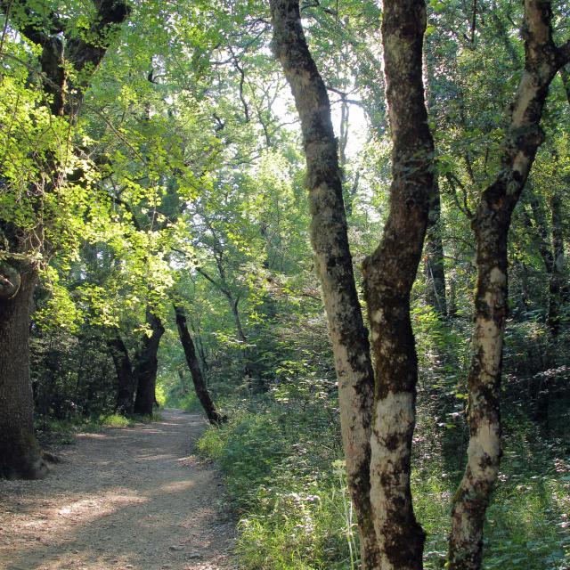 Balade Nature Foret Sainte Baume Source Des Nayes Oti Aubagne