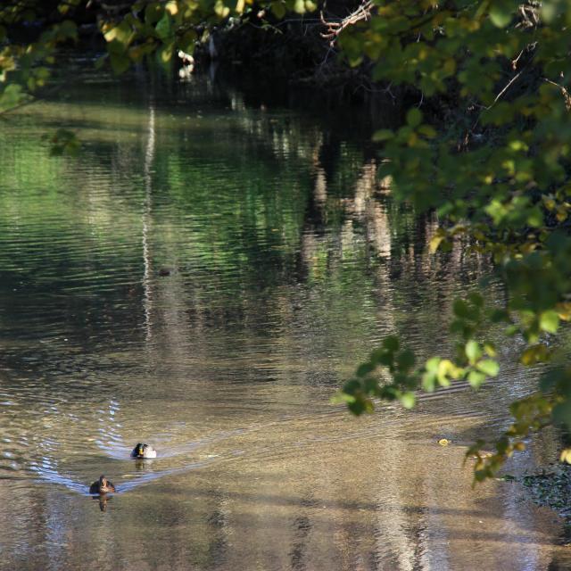 Canards Huveaune Nature Oti Aubagne