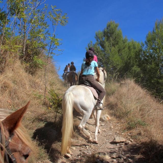 Equitation Cheval Balade La Provence A Cheval Oti Aubagne