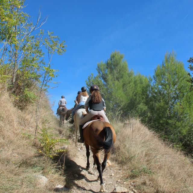 Equitation Garrigue Balade La Provence A Cheval Oti Aubagne