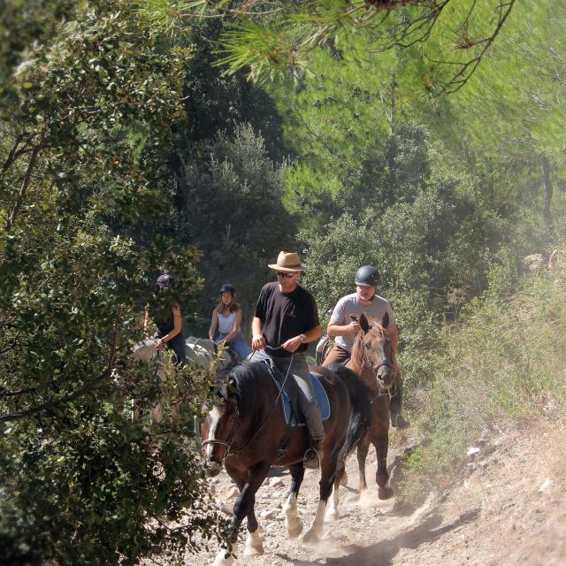 Equitation Nature Collines Balade La Provence A Cheval Oti Aubagne