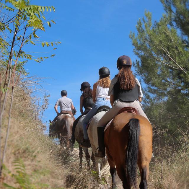 Equitation Sport Cavalier Pinede Balade La Provence A Cheval Oti Aubagne