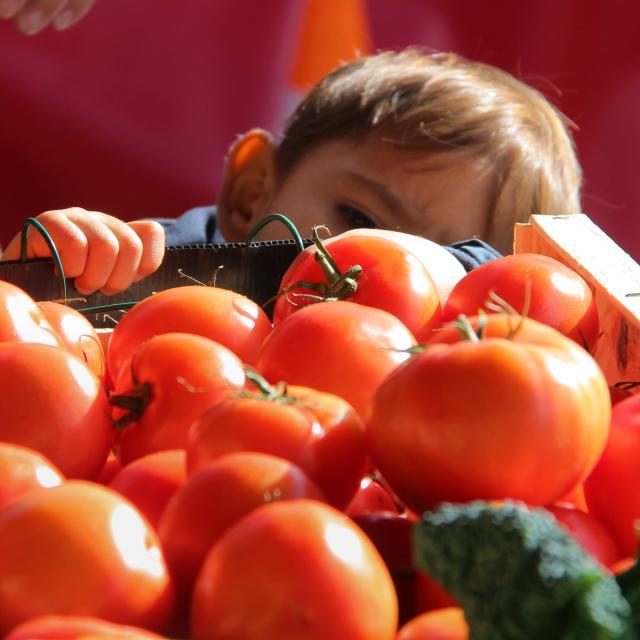 Etal Tomates Marche Provence Oti Aubagne
