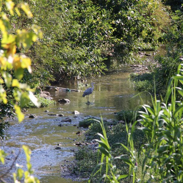 Heron Fleuve Huveaune Nature Oti Aubagne