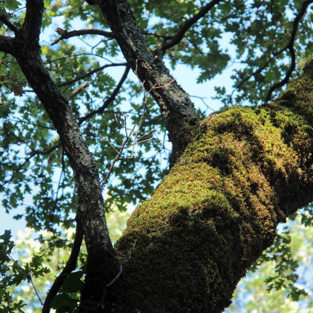 Mousse Chene Rouve Nature Sainte Baume Oti Aubagne