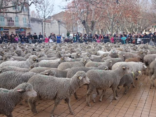 Moutons Auriol Transhumance Oti Aubagne