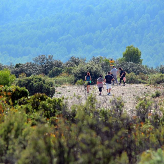 Randonneurs Sentiers Massif De L'etoile Nature Oti Aubagne