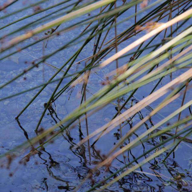 Roseau Ruisseau Nature Sainte Baume Oti Aubagne