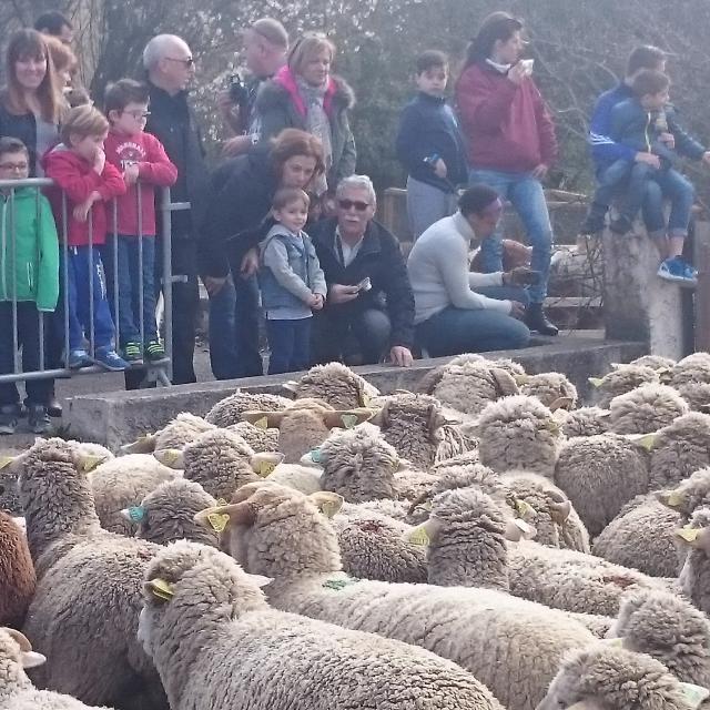 Transhumance Moutons Belcodene Oti Aubagne