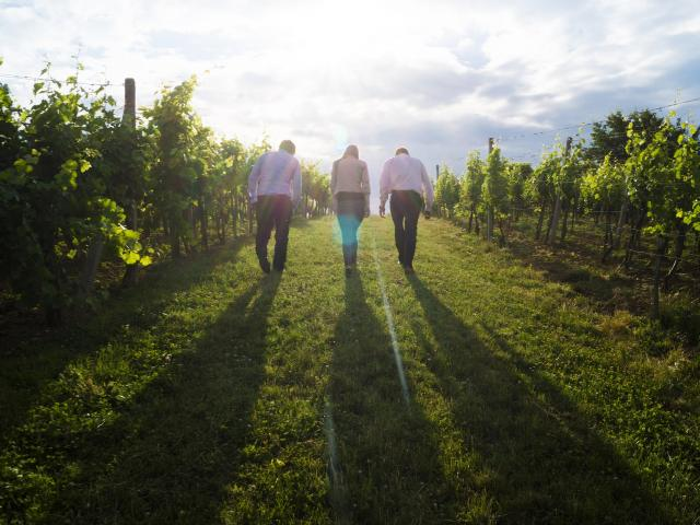 Tourisme d'affaire vignes