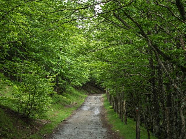Chemin Boisé Vert
