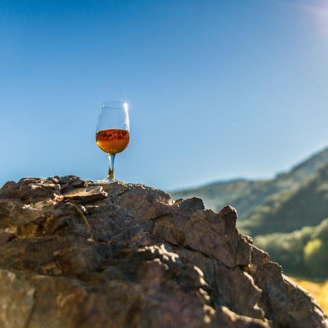 vigne vendanges vignoble vin