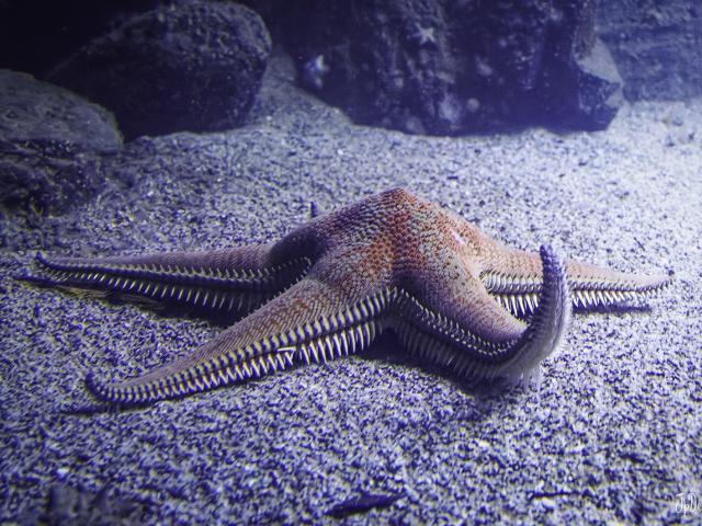Biodiversarium Aquarium (4)