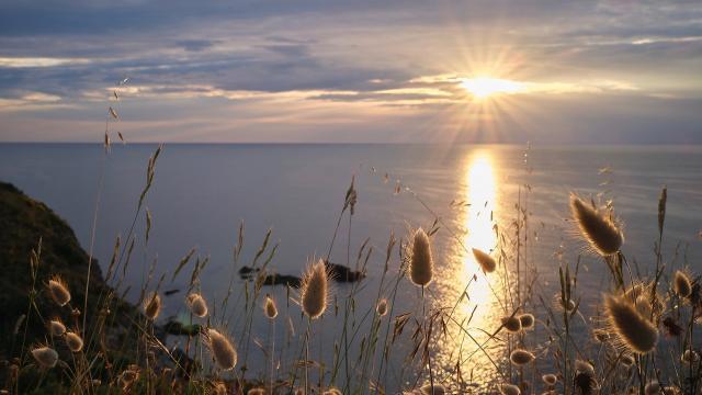 Faune Flore Mer Méditerranée Lever Soleil