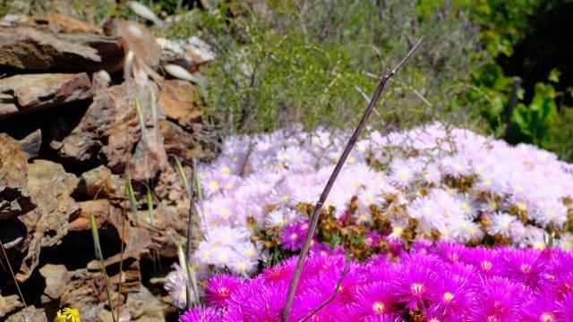 Faune Flore Printemps