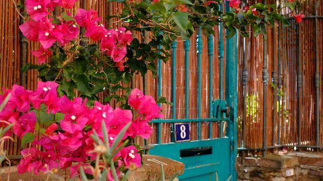Faune Flore Printemps Bougainvillier Porte