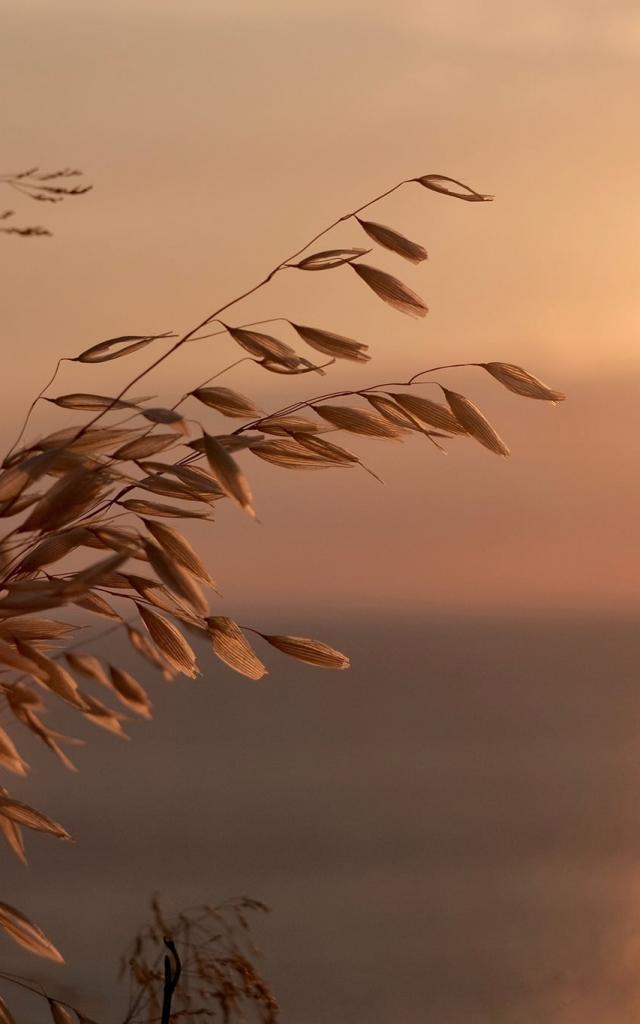 Lever Soleil Faune Flore Mer Méditerranée