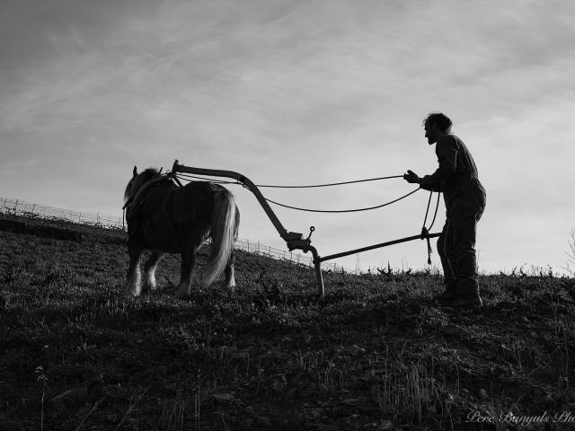 Vignoble Labour Cheval âne