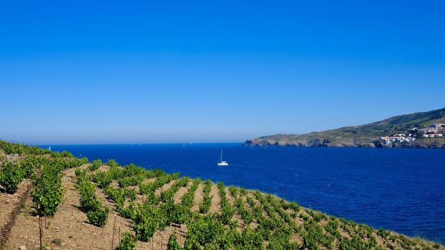 Vignoble Mer Méditerranée