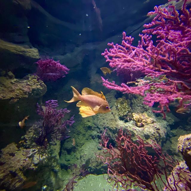 Aquarium Biodiversarium Poisson