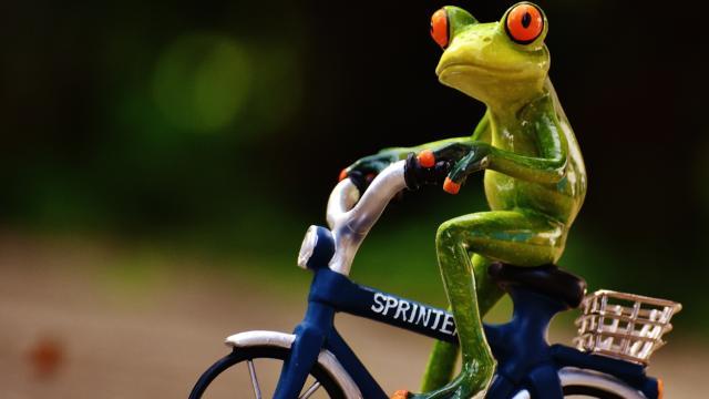 frog-1703578.jpg