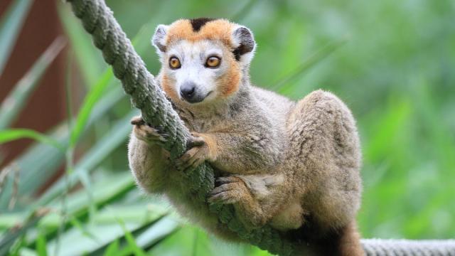 Zoo Asson Nosybe