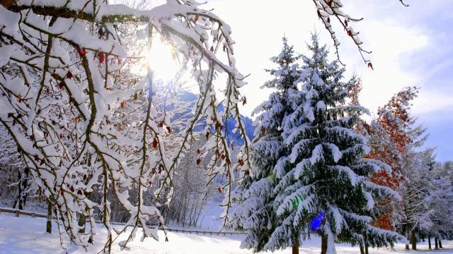 arbre-neige-la-mirande-bd.jpg
