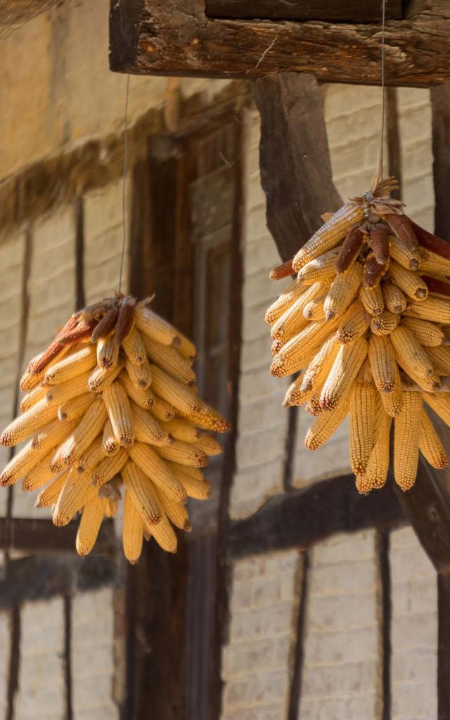 Gerbe de maïs, Ferme bressane en pan de bois