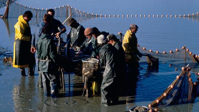 Pêche d'Etang Dombes