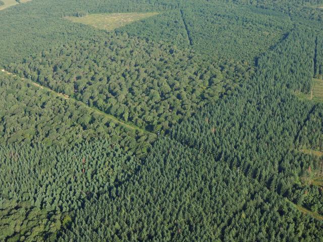 Vue aérienne Massif forestier de Seillon et la Rena