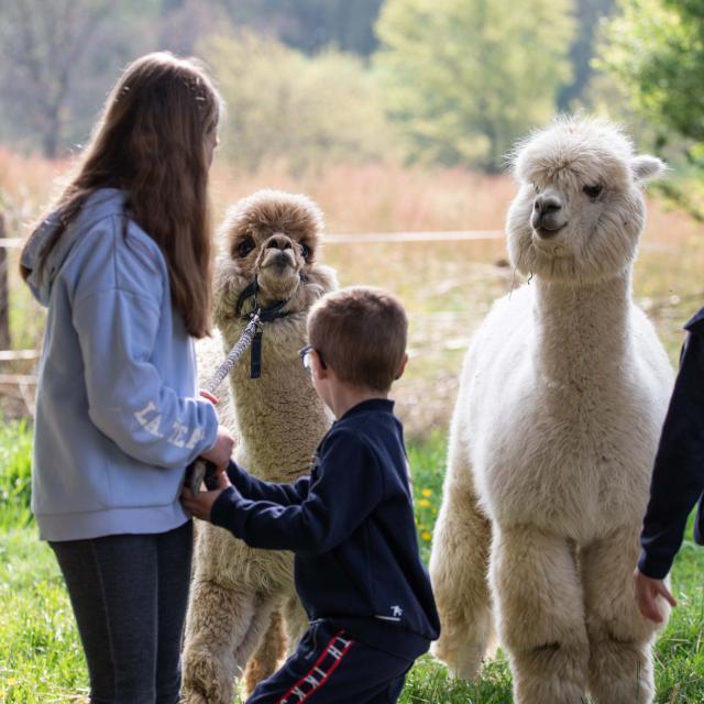 Lamas et enfants
