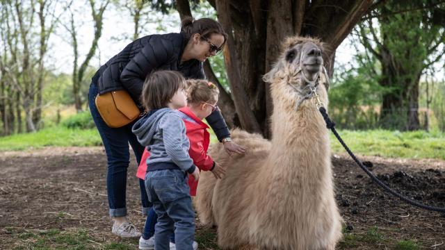 Lama, parent et enfants